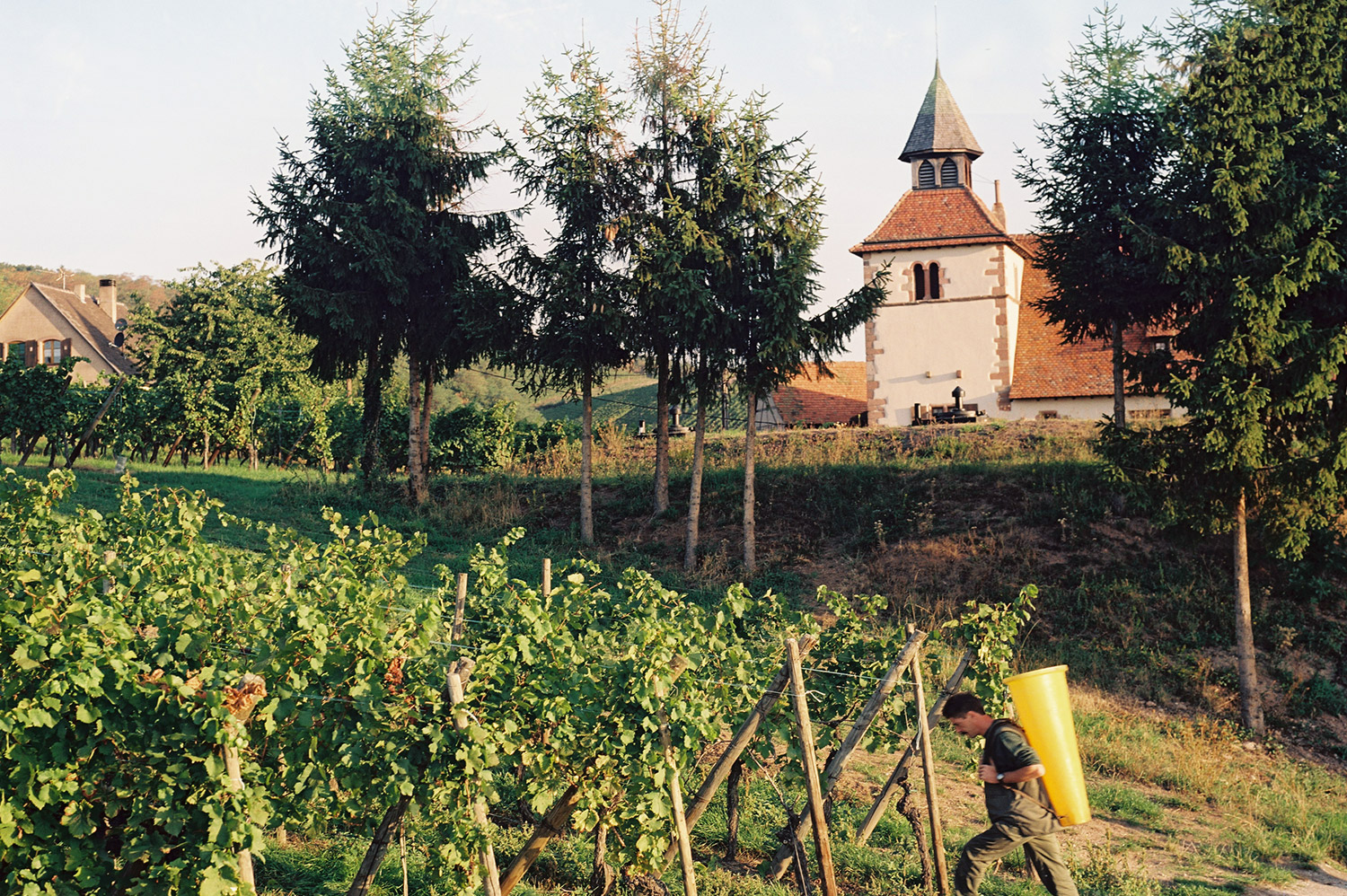 domaine Willy Gisselbrecht